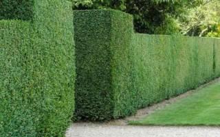 Какой забор нужно сделать в саду для благоприятного роста деревьев?
