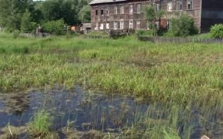 Какой фундамент лучше для дома из бруса на болотистой почве?